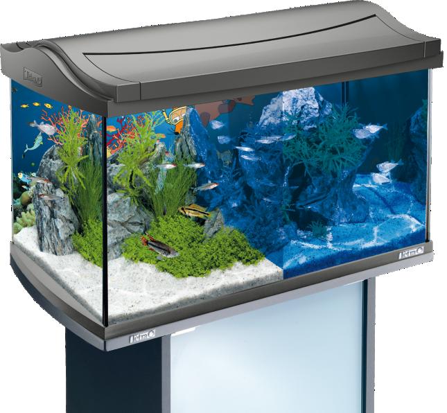 tetra mein neues aquarium mit der maus. Black Bedroom Furniture Sets. Home Design Ideas