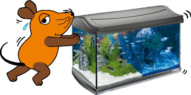 Tetra mein neues aquarium mit der maus for Aquarium reinigen
